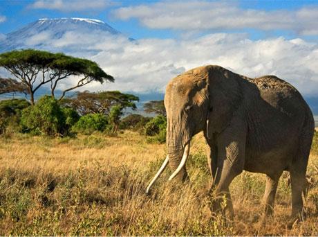 Tanzânia Atrações