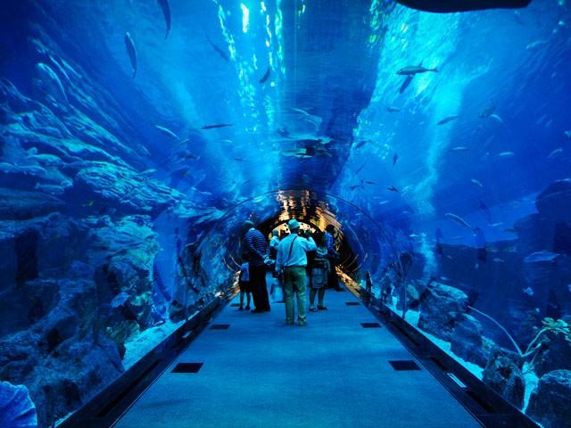 20 Amazing Aquariums You Have to Visit