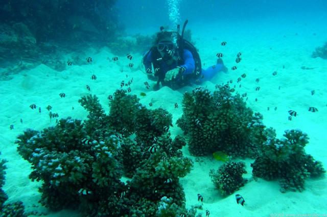 20 Amazing Places to Scuba Dive
