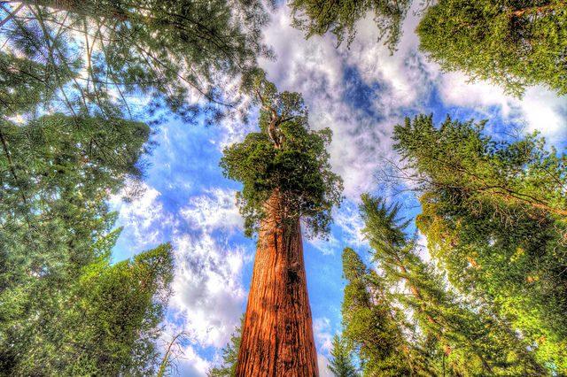 10 Massive Trees You Can Climb